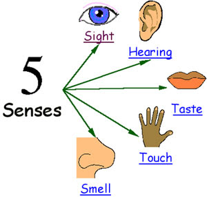 5-senses-1rewmyn
